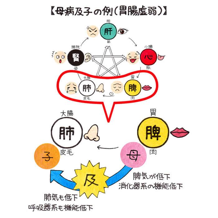 まるわかり中医学 第29回 五行学...